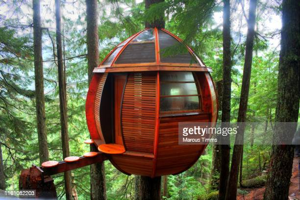 dwelling in the trees - hut stock pictures, royalty-free photos & images