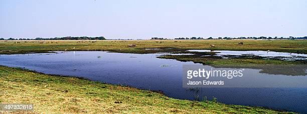 A dwindling waterhole on a vast flood plain in the dry season.