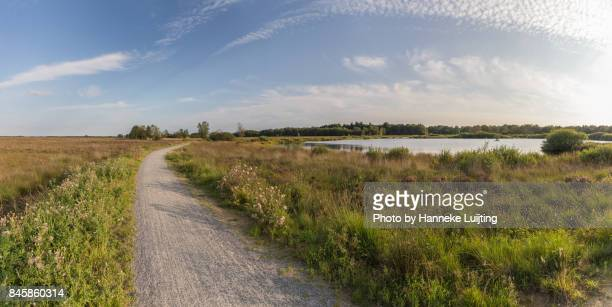 dwingelderveld national park - drenthe stock pictures, royalty-free photos & images