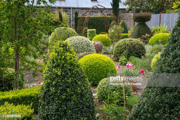dyffryn fernant gardens, dinas, pembrokeshire, wales - evergreen plant stock pictures, royalty-free photos & images