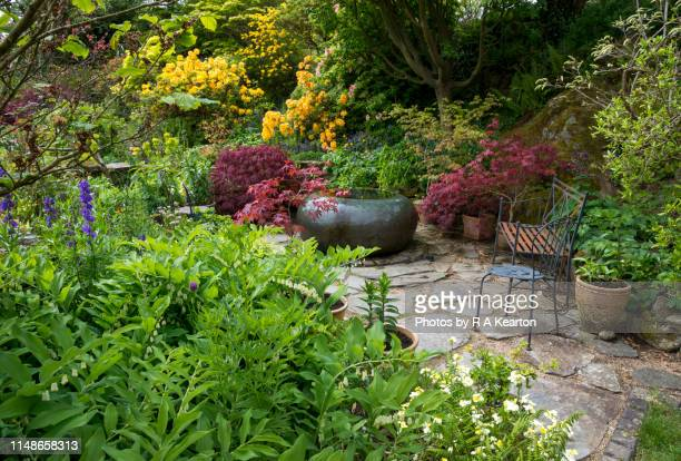 dyffryn fernant gardens, dinas, pembrokeshire, wales - japanese maple stock pictures, royalty-free photos & images