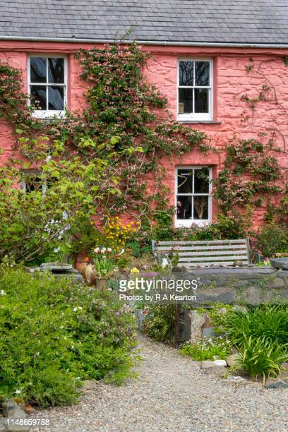 dyffryn fernant gardens, dinas, pembrokeshire, wales - honeysuckle stock pictures, royalty-free photos & images