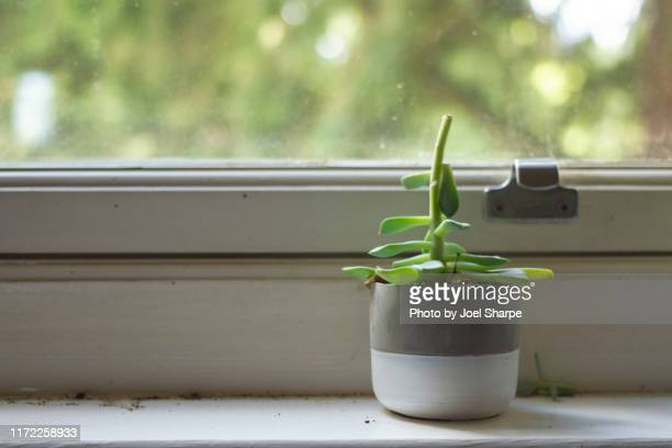 dying house plant - wilted stock pictures, royalty-free photos & images