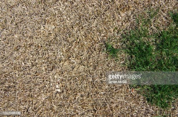 dying lawn - droog klimaat stockfoto's en -beelden