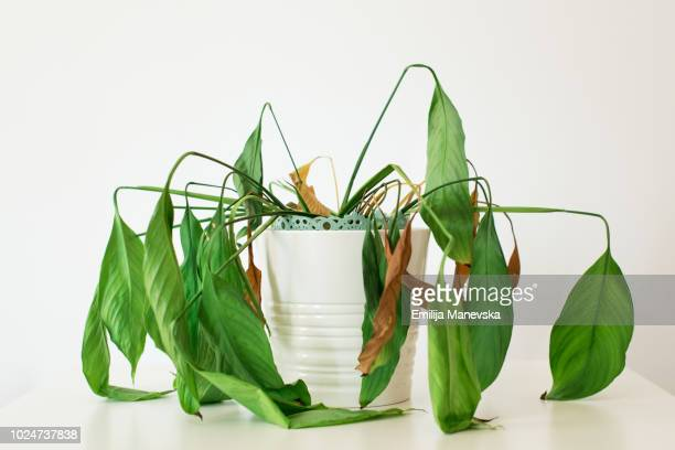 dying plant - death stock pictures, royalty-free photos & images