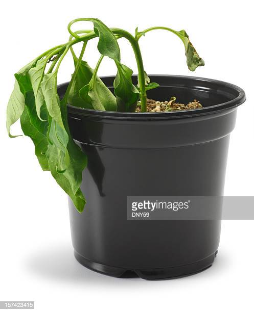 dying plant - dead stock pictures, royalty-free photos & images
