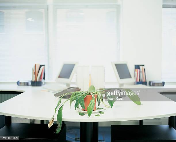 dying potted plant in an office - wilted plant stock pictures, royalty-free photos & images