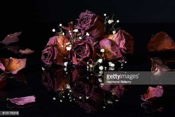 dying roses - morte - fotografias e filmes do acervo