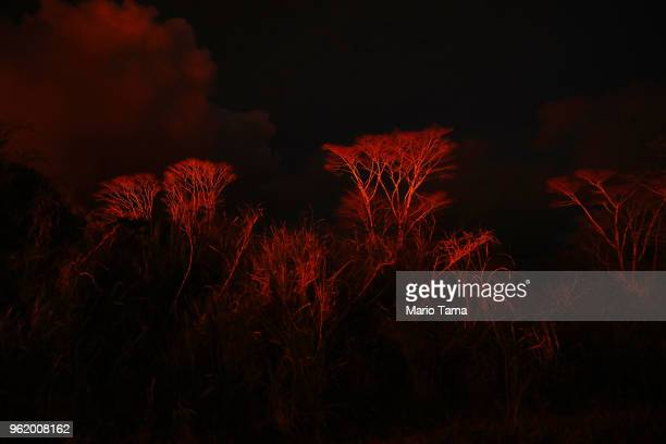 Dying trees are illuminated by the glow from nearby Kilauea volcano lava on Hawaii's Big Island on May 23 2018 in Pahoa Hawaii Trees and plants are...