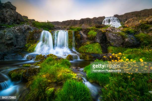 dynjandi waterfall in westfjords, iceland. - westfjords iceland stock photos and pictures