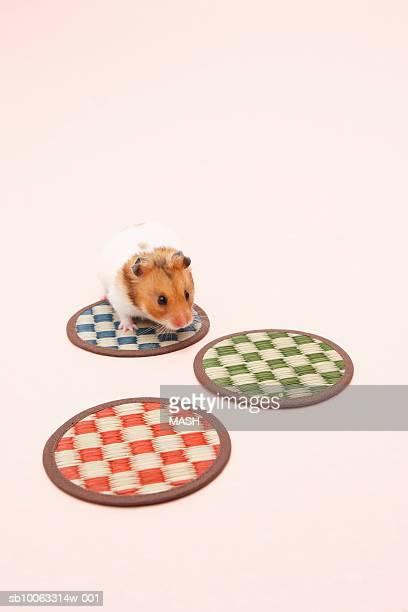 Dzhungarian hamster (Phodopus sungorus) and three coasters, elevated view, studio shot