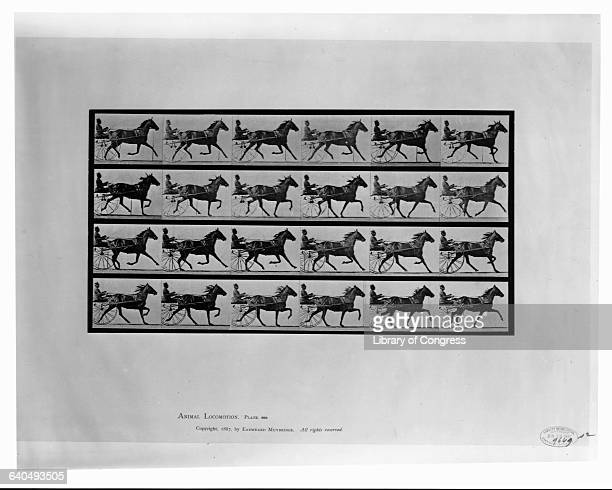 Eadweard Muybridge's photo series showing that all of a horse's legs are off the ground at one time as it trots