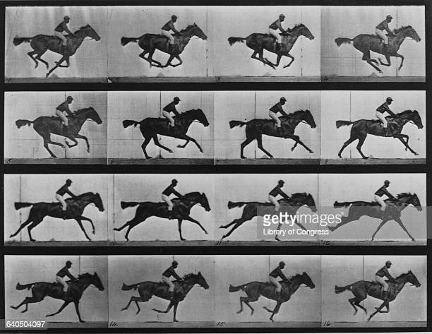 Eadweard Muybridge's photo series showing that all of a horse's legs are off the ground at one time as it gallops