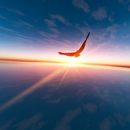 Eagle against horizon sun 619264626
