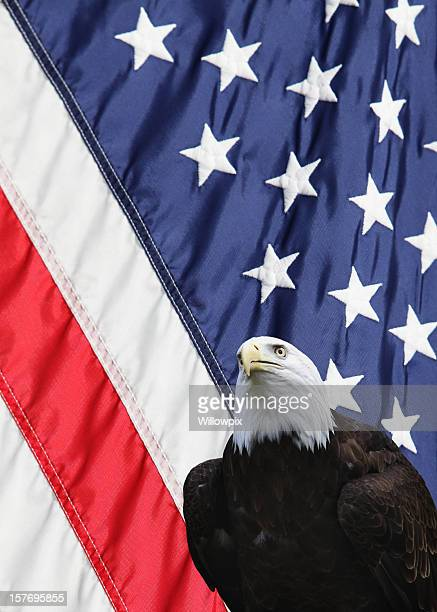 eagle and american usa flag - vertical - bald eagle with american flag stock pictures, royalty-free photos & images