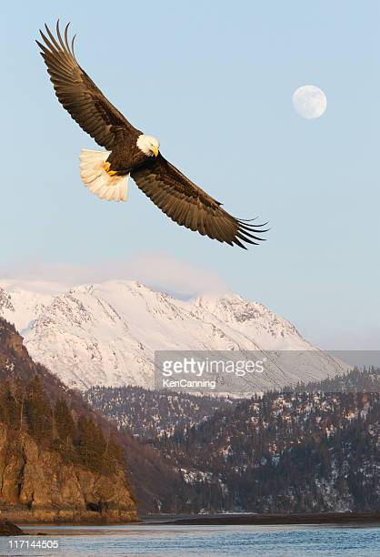 Eagle and Snow covered Mountains