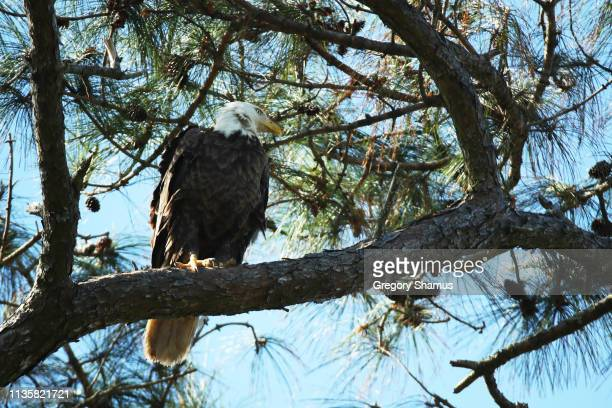 Eagle as seen on the course during the first round of The PLAYERS Championship on The Stadium Course at TPC Sawgrass on March 14, 2019 in Ponte Vedra...