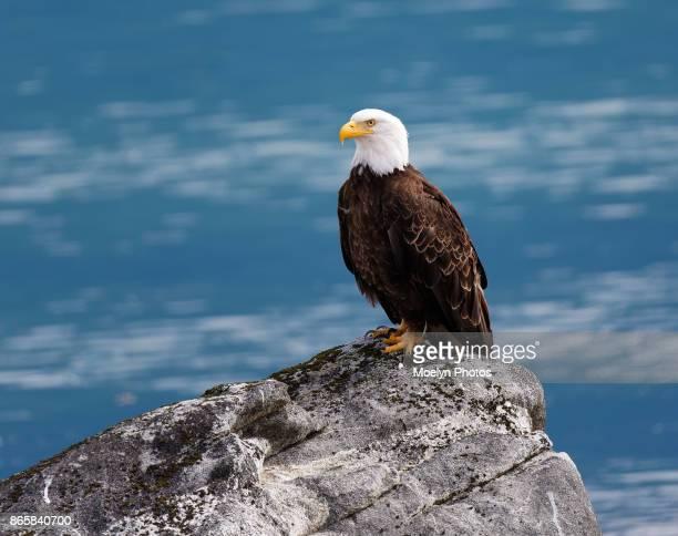Eagle- Assertive Stance