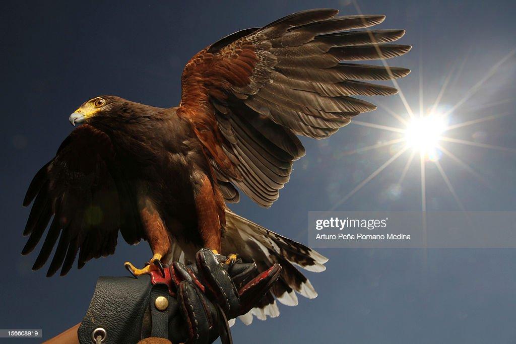 Eagle luz de fundo : Foto de stock