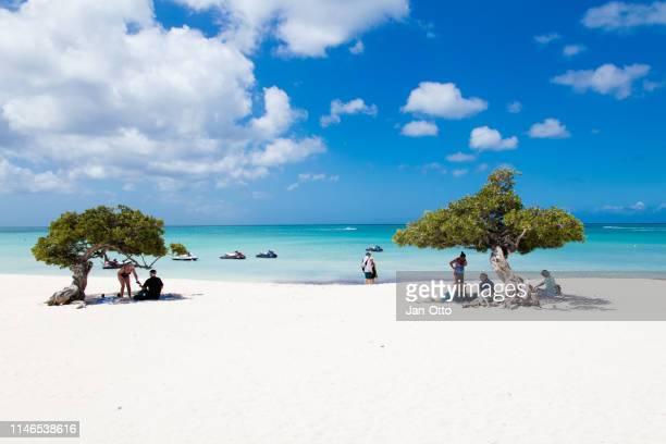 eagle beach met divi divi bomen op aruba eiland - aruba stockfoto's en -beelden