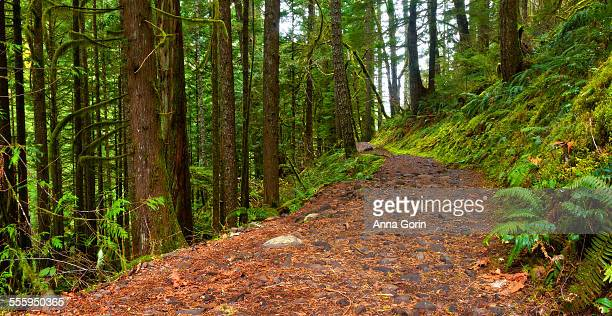 Eagle Creek hiking trail panorama, Oregon