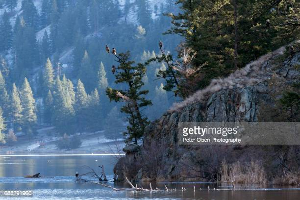 eagle eyes - kamloops stock pictures, royalty-free photos & images