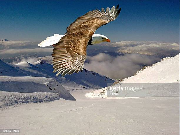 Eagle flying against  mountains