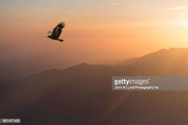 Eagle flying in sunrise sky over remote landscape