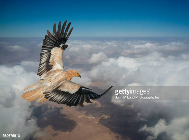 eagle flying over clouds in sky - hawk stock photos and pictures