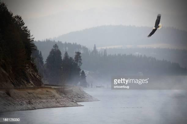 Eagle volando sobre el lago.