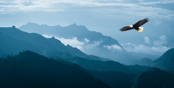 Eagle flying over mist mountains in the morning 481089792