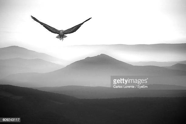 Eagle Flying Over Mountain Range Against Clear Sky