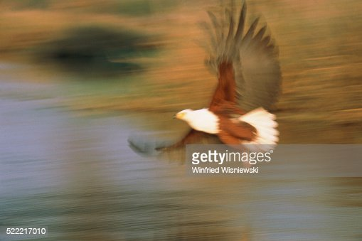 Northern Gannet Braking In Flight High-Res Stock Photo
