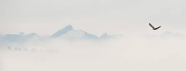 Eagle in flight with mist and mountains