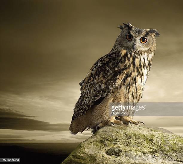 eagle owl standing full length on a rock - owl stock pictures, royalty-free photos & images