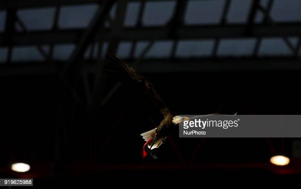 Eagle quotVitoriaquot flies over the stadium during the Portuguese League football match between SL Benfica and Boavista FC at Luz Stadium in Lisbon...