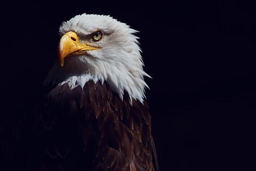 eagle shot 672412728