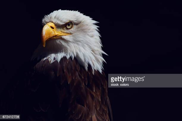 eagle shot - eagle stock pictures, royalty-free photos & images