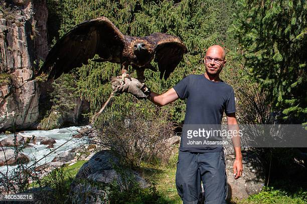 eagle trained for hunting - kyrgyzstan stock pictures, royalty-free photos & images