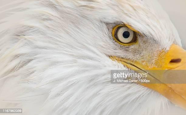eagle up close - home run ストックフォトと画像