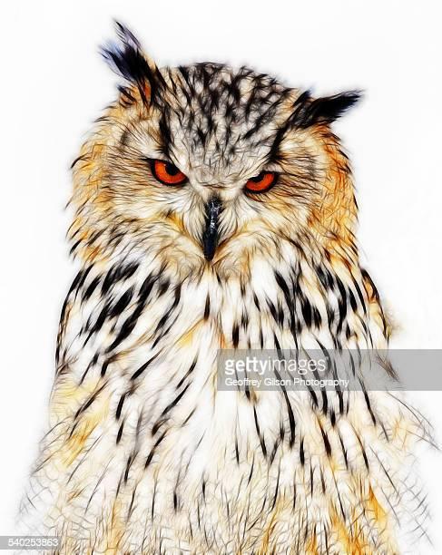 eagle-owl - gufo reale foto e immagini stock
