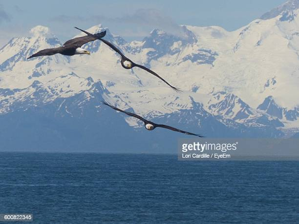Eagles Flying Over Sea Against Snowcapped Mountains