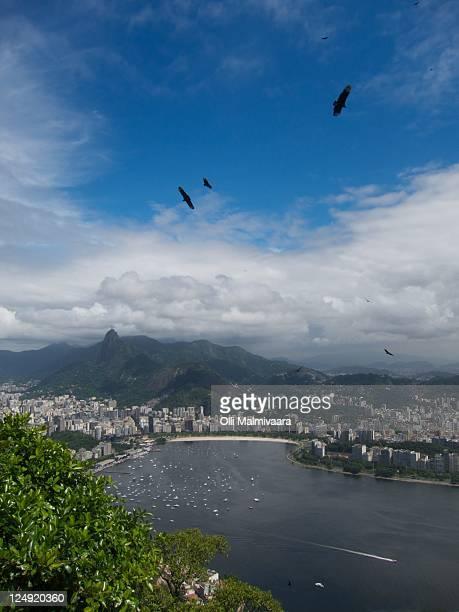eagles flying - raubvogel stock-fotos und bilder