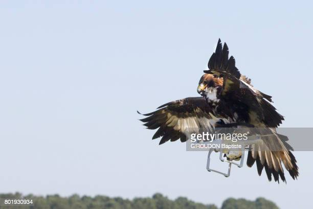 Eagles now help the army neutralize drones which could harm the well being of citizens in France February 27 2017