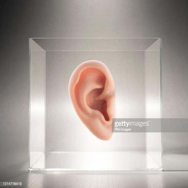 ear in a clear box - ear stock pictures, royalty-free photos & images