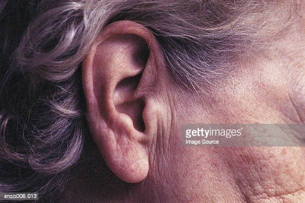 ear - ear stock pictures, royalty-free photos & images