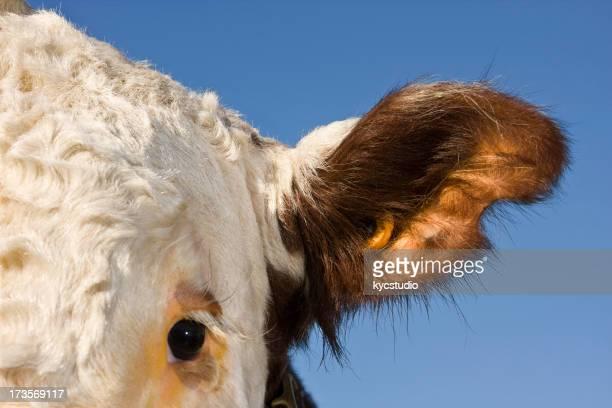 Ear tag