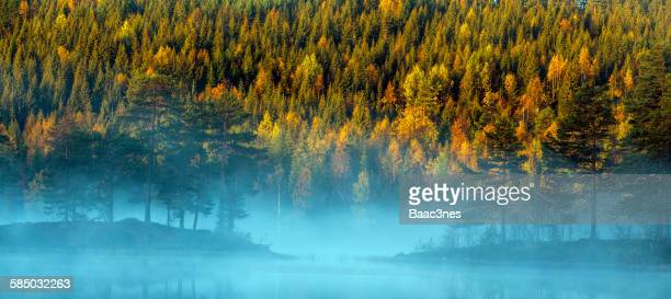 Early autumn morning in the forest