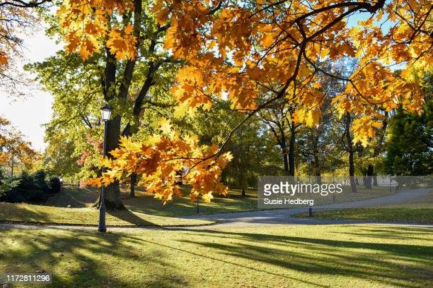 beautiful sunny morning park autumn with