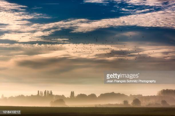early autumn morning on the waterloo battlefield, october 2016 - waterloo belgium stock pictures, royalty-free photos & images